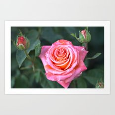 Fine Art Photography - Flowers - Botanical Art - Orange, Peach, Coral Rose Photograph Art Print