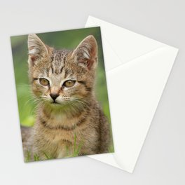 Little Tiger in Gras Stationery Cards