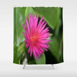 Pink Flower of Succulent Carpet Weed  Shower Curtain
