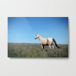 Horse in the Australian desert #2 Metal Print