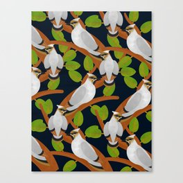 Bohemian waxwing pattern Canvas Print
