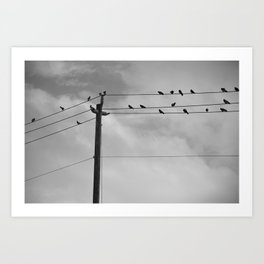photography gothic birds animals black-white digital creepy by Robert Gregory Griffeth Art Print