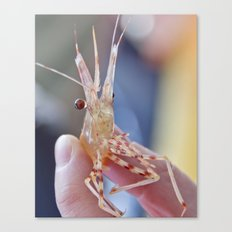 Shrimply Irresistible Canvas Print