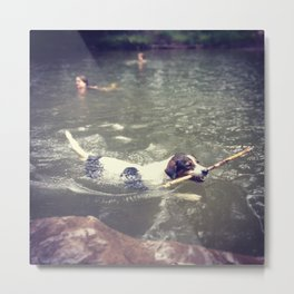Dog in Summer Metal Print