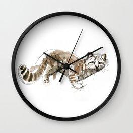 Andean mountain cat (AGA) (c) 2017 Wall Clock