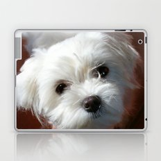 Cute Maltese asking for a treat Laptop & iPad Skin