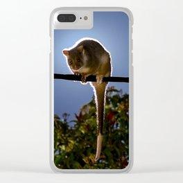 Common Ringtail Possum - Pseudocheirus peregrinus Clear iPhone Case