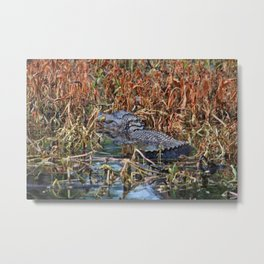 Hiding Spot For Alligator Metal Print