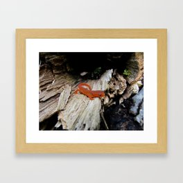 Red Newt Framed Art Print