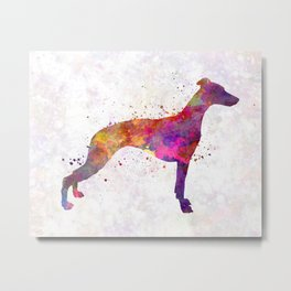 Whippet in watercolor Metal Print