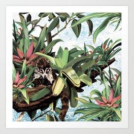 Ring tailed Coati Art Print