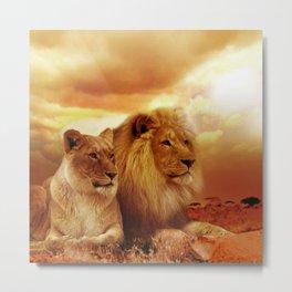 African lions Metal Print