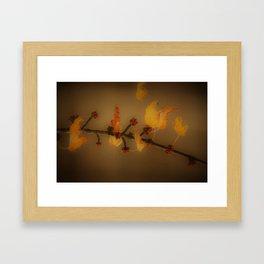 Autumn Colors Framed Art Print