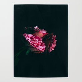 Midnight Roses Poster