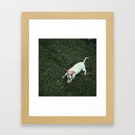 Dog in Grass Framed Art Print