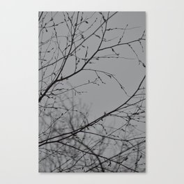 Branches Impressions Canvas Print