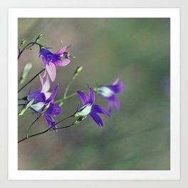 BlueBell Flower Nature Photography  Art Print