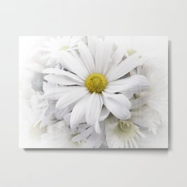White African Daisy at Barthels Farm Market Metal Print