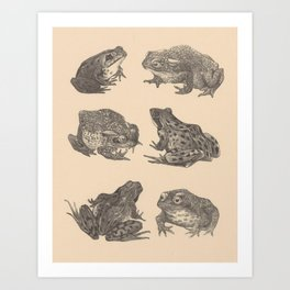 Naturalist Frogs Art Print