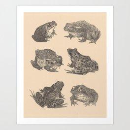 Naturalist Frogs Art Print
