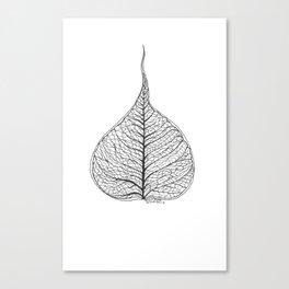 Ficus Religiosa Canvas Print