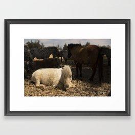 Ponies through the meadows Framed Art Print