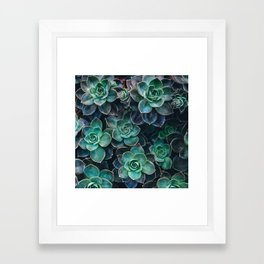 Succulent Blue Green Plants Framed Art Print
