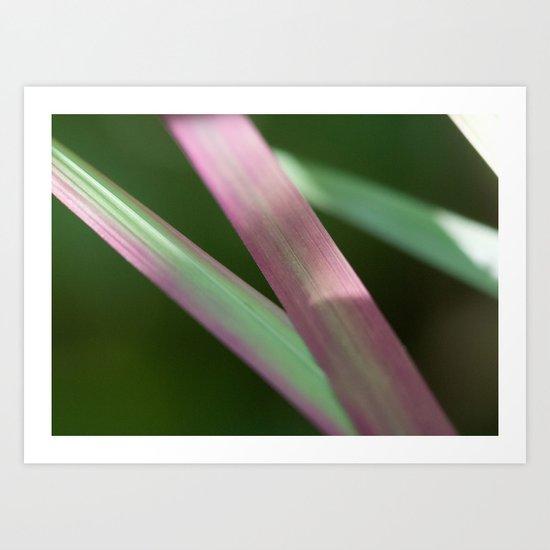 Red Baron close-up (Japanese bloodgrass) #1 #art #society6 Art Print