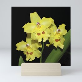 Glorious Golden Orchid - Odontonia Yellow Parade Alpine Mini Art Print