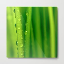 Green grass 32 Metal Print
