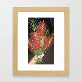 Bottle brush Framed Art Print