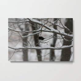 Junco Metal Print