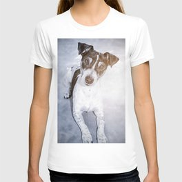 Young dog jack russel portrait lying looking at the camera T-shirt
