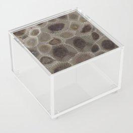 Petoskey Stone Acrylic Box