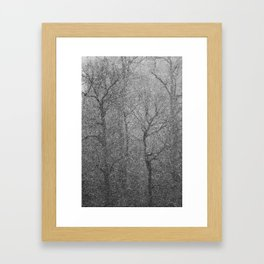 The Lines of Trees in a Whiteout Framed Art Print