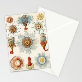 Hydromedusen Röhrenquallen (Siphonophoren), translated Tube Jellyfish, from The Meyers Großes Konver Stationery Cards