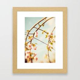 Cut through the Garden V Framed Art Print