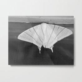 delicate moth Metal Print