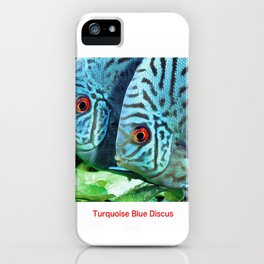 Turquoise Blue Discus Fish iPhone Case