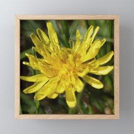 Dandelion Macro Framed Mini Art Print
