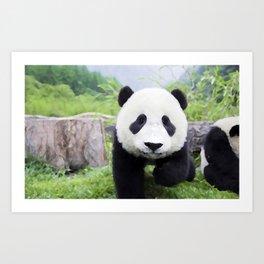 Panda Life Art Print