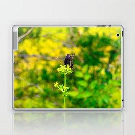 Spicebush Swallowtail Butterfly Laptop & iPad Skin