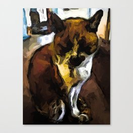 Sleeping Cat of Brown and White with Shadows Canvas Print