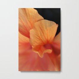 Double Orange Hibiscus Petals Metal Print