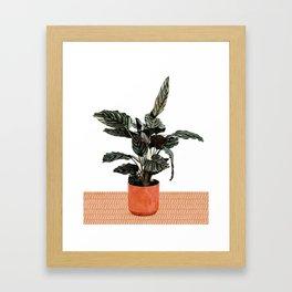 Calathea Planter Framed Art Print