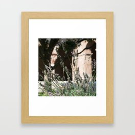 Lavender of Cloisters Framed Art Print