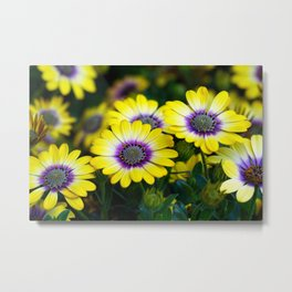 The Yellows and Purples of Spring Flower Photographic Portrait Metal Print