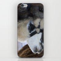 alpaca iPhone & iPod Skins featuring Alpaca by Deborah Janke