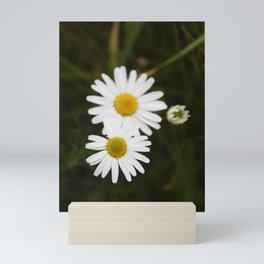 Three Daisies Mini Art Print