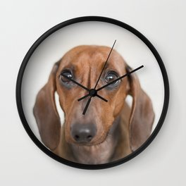 Hungry eyes for dachshund lovers Wall Clock